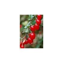 100 Sementes Goji Berries- Frete Gratis Carta Registrada