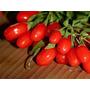 Sementes Da Maravilhosa Goji Berries Do Tibet