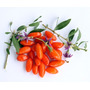 Sementes Da Super Fruta Goji Berry Do Tibet