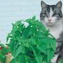 1 Pacote De Sementes De Erva Dos Gatos Catnip -lacrado