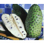 30 Sementes De Graviola Frutífera E Medicinal
