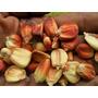 Sementes Do Maravilhoso Milho Maiz Rublo Rajado - Peruano