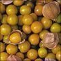 Tomatillo Abacaxi - Pineapple Physalis - Sementes Para Mudas