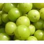 12 Sementes Da Fruta Groselha Da Índia ( Amla )