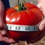 20 Sementes Tomate Gigante Do Guinness #by60
