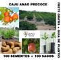 Caju Anao Precoce 100 Sementes Frete Gratis+ 100 Saquinhos