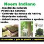Neem Indiano 10 Sementes +sacos+guia De Plantio Frete Gratis