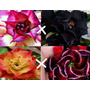 Rosa Do Deserto Kit Cruzamentos 100 Sementes Adenium Obesum