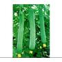 100 Sementes De Bucha Vegetal Gigante+manual De Cultivo