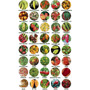 Kit 10 Variedades Sementes De Pimentas Rara Escolha Entre 40
