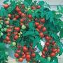 100 Sementes De Tomate Cereja Frete Grátis - Cultive Em Vaso