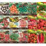 Kit 15 Tipos Sementes Pimenta Jamaican Habanero Cayenne Bico