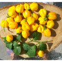 30 Sementes Da Pimenta Scotch Bonnet Yellow+manual