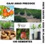 Caju Anão Precoce 100 Sementes Pomar Castanha Boa Renda
