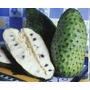Graviola Morada Gigante 1kg Sementes Frutifera