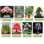 Kit Bonsais 16 Sementes 8 Tipos - Frete Grátis/orquídea/muda
