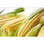 Sementes De Milho Pra Pamonha 1 Kg