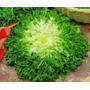 Endivia Cuore Giallo - Hortaliças -sementes Para Mudas