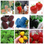 10 Sementes De Morangos Coloridos 9 Cores- Frete Grátis Muda