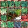 Sementes Do Kit Salada Orgânica - 12 Pacotinhos Fretegrátis
