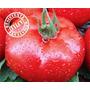 Sementes De Tomate Caqui Híb. Dominador 1.000 Sementes Tps