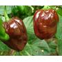 Sementes De Pimenta Habanero Chocolate Rara Exótica Promoção