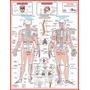 Mapa Sistema Esquelético 1 - Medicina Anatomia Fisioterapia