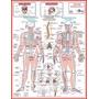 Mapa Sistema Esqueletico - Tamanho 120x90cm