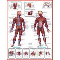 5 Mapas Do Corpo Humano 120x90cm A Sua Escolha - Frete Único