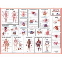 Mapa Do Corpo Humano 120 X 90 Cm
