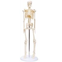 Esqueleto Humano C/ 85 Cm - Modelo Anatômico.