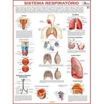 Mapa Gigante Do Sistema Respiratório Humano - Pneumologia