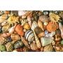 15 Formas Acetato P/culinaria Conchas E Frutos Do Mar P/enc