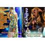 Dvd Banda Calypso Em Melhores Momentos Norte 2010