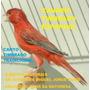 Canto Canário Timbrado Espanhol -tradicional -frete Gratis