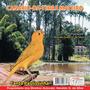 Cd Canto De Pássaros-canário-da-terra - Canto Mateiro