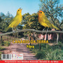 Cd Canto De Pássaros Canário Da Terra Fibra