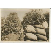 Fazenda Guatapara - Rego Condutor De Cafe