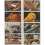 Ponto Do Cartão Animais Silvestres