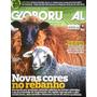 Revista Globo Rural 293 - Ovinos Crioulos Fazenda Irapuá