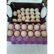Ovos Indío Gigante Galado (leia O Anuncio Antes De Comprar)