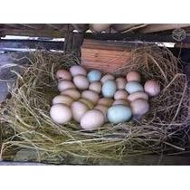 Vendo Ovos Galados De Galinha Caipira, E Ovos Para Consumo