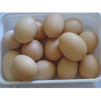 Ovos Galados De Galinha Caipira Pura Caixa Com 10 Duzias