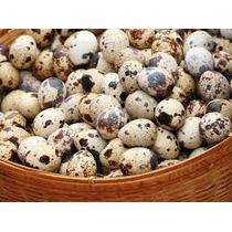 Ovos Galados De Codornão Gigante