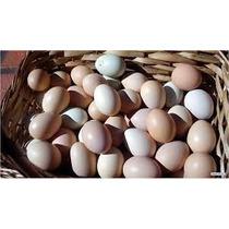 Dúzia De Ovos Galados De Galinha Caipira Super Peso