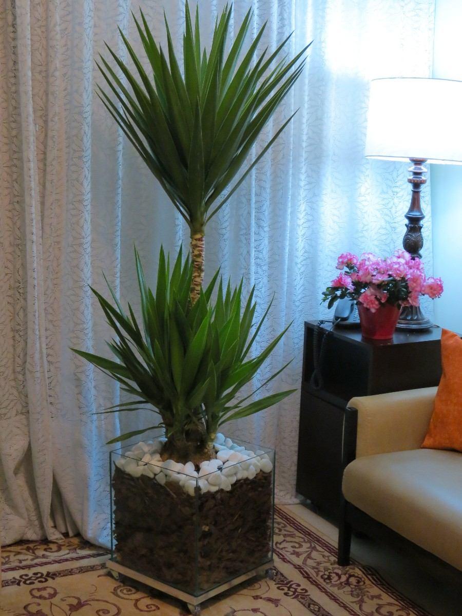 flores de jardim tipos:Palmeira Yucca Iuca No Cachepot De Vidro 35x35x35cm – R$ 189,90 no