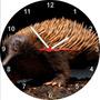 Relógio De Parede Redondo Ornitorrinco Animais Selvagens