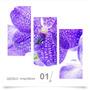 Painel Adesivo Parede Decorativo Flores Orquidea 01