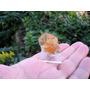Selenita Dourada - Mineral Para Coleção