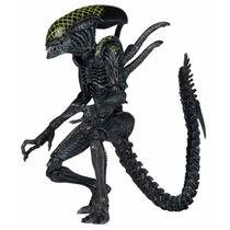 Alien Grid - Alien Vs Predador - Neca Alien Série 7
